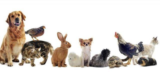 Tener animales dom sticos es una responsabilidad - Mascotas originales para tener en casa ...